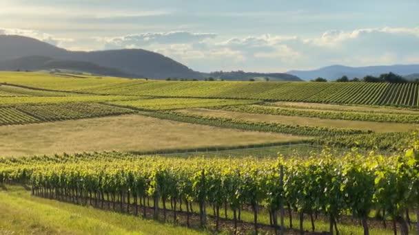 Vinice Venkovská krajina. Vinice Falcko, Deutsche Weinstrasse (Německá vinařská stezka), Porýní-Falcko, Německo