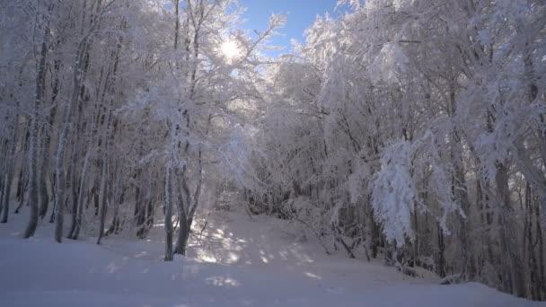 havas erdők egy napsütéses napon