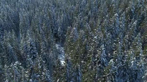 Letecký pohled na sněhem pokryté smrkovým porostem