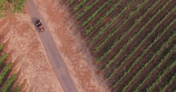 Aerial top view of a car driving a country road along the vineyard