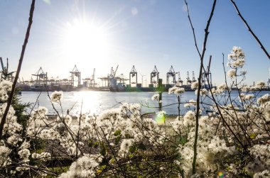 Sun above scenic harbor area with flowers in the foreground and port facilities in the background in Hamburg, Germany