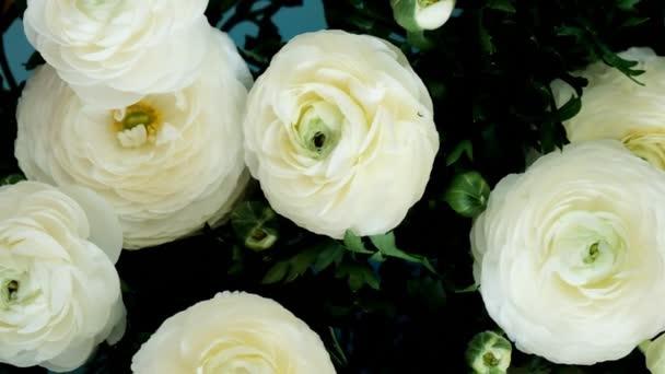 bílá růže zavřít pohled