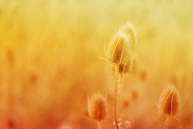 """Картина, постер, плакат, фотообои """"осенняя трава. красивый осенний фон природы. сухая колючая трава. осеннее настроение. осенний сезон. постеры картины модульные"""", артикул 386545862"""