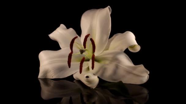 fehér liliom