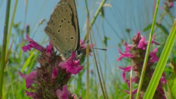 A pillangók olyan virágok, amiket a szél tépett szét. Reggeli harmat. Narancssárga pillangó a virágon. Tavasz az erdőben. Természet, rét, tajga.