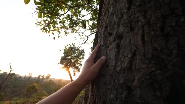 Hegy és ősz fák és arany óra naplemente színek epikus dicsőség..