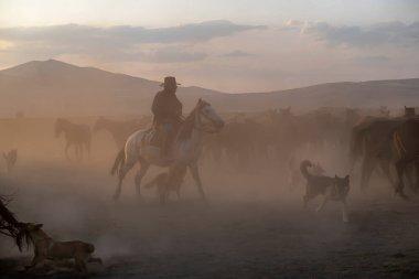 Wild horses run in foggy at sunset