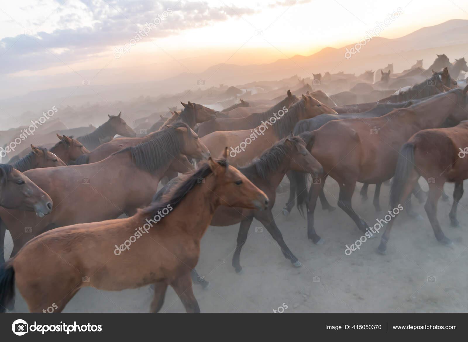Wild Horses Run Foggy Sunset Wild Horses Running Dust Hormetci Stock Photo C Attractionart 415050370