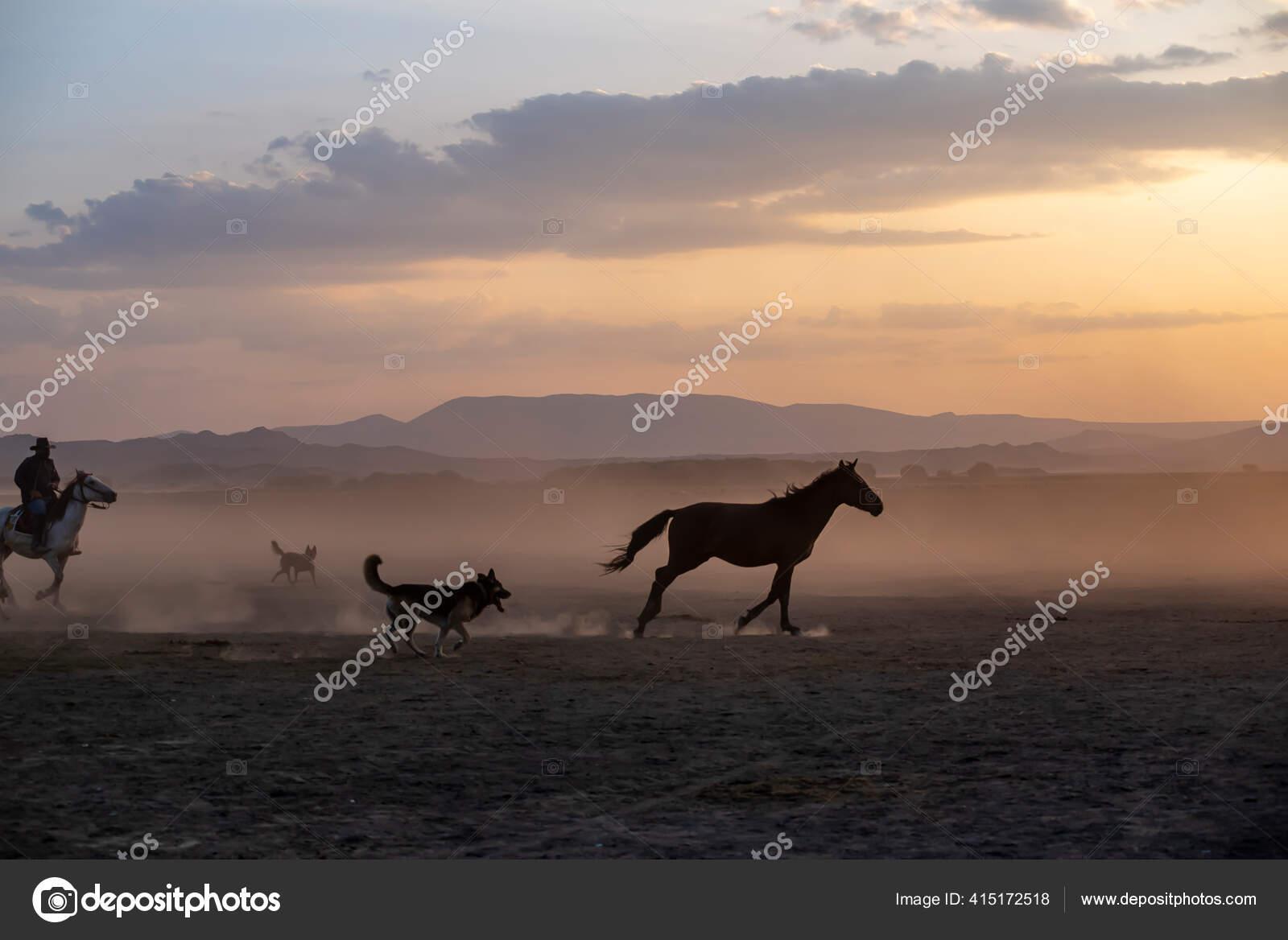 Wild Horses Run Foggy Sunset Wild Horses Running Dust Hormetci Stock Photo C Attractionart 415172518