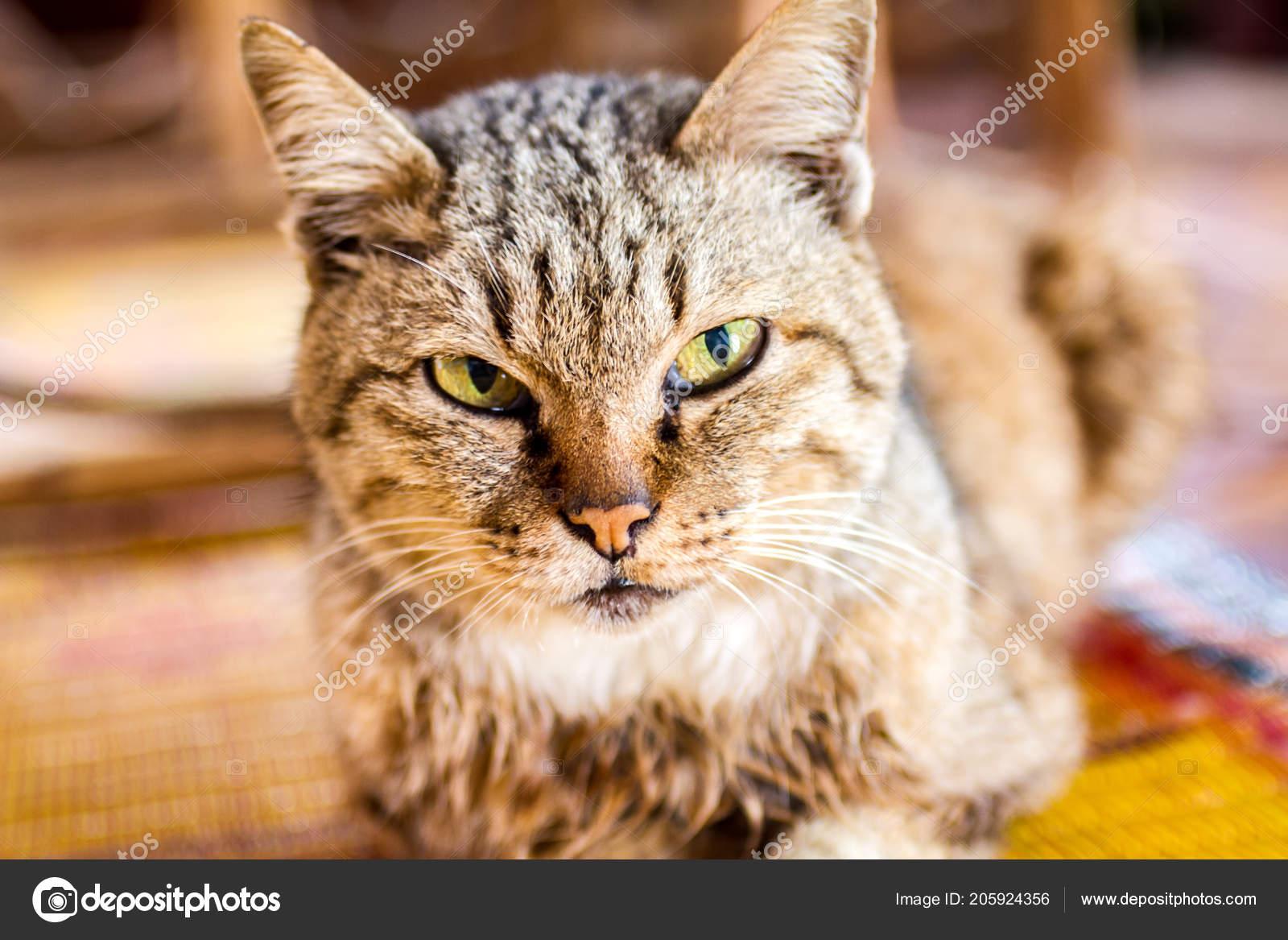 Obrovský péro malé kočička porno