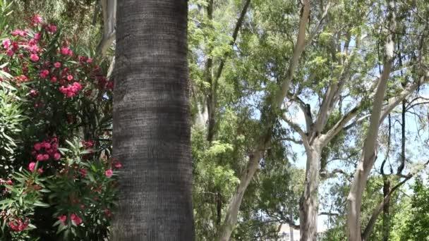 Fa és pálmafa a természetben