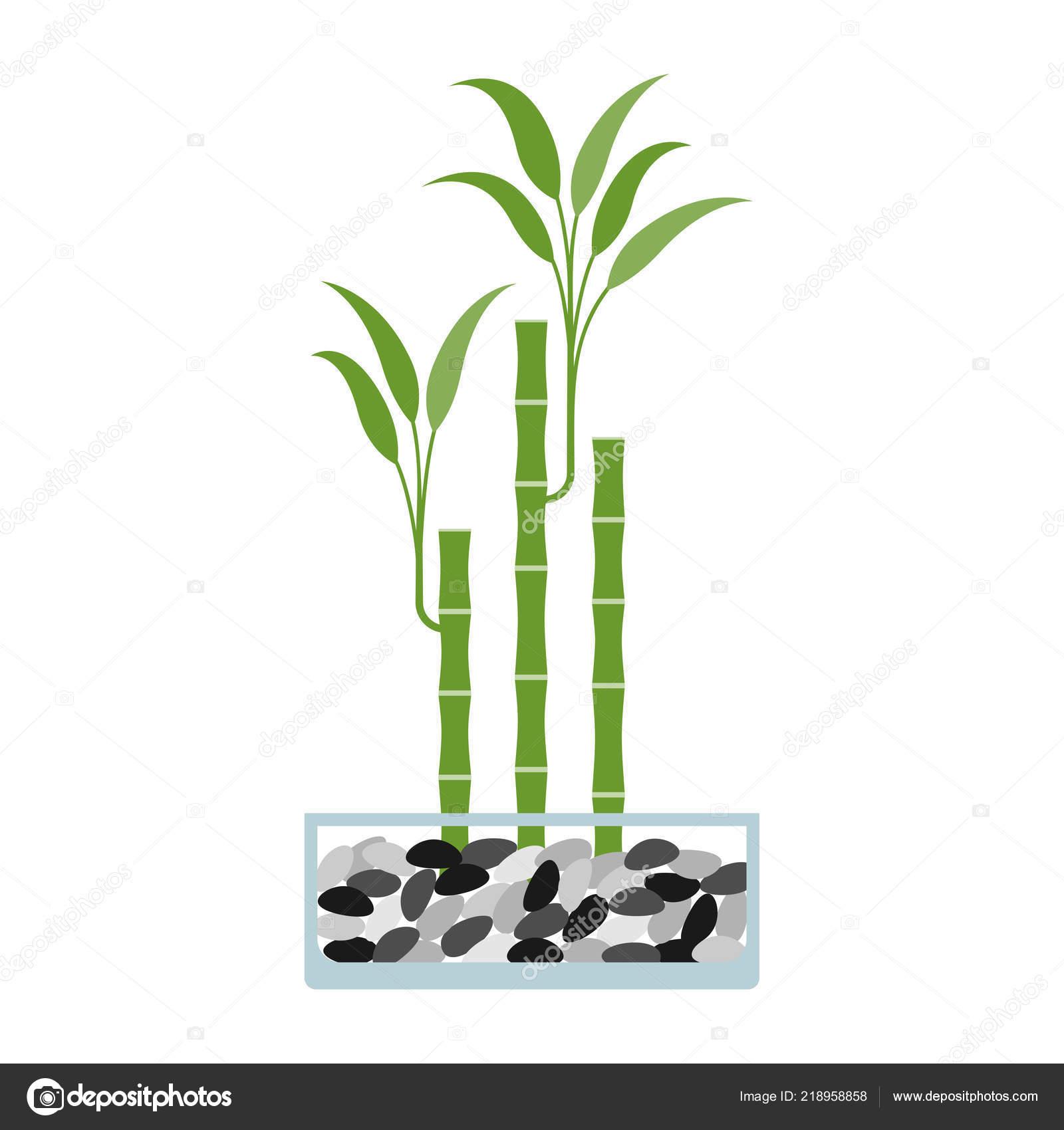 bambous pot verre illustration vectorielle — image vectorielle