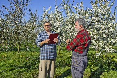 Agronomist and farmer in the orchard