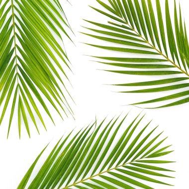 Pattern of palm leaves on white background. Flat lay, top view. Flora background.