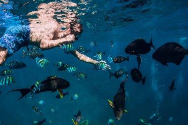 Freediver yüz Okyanusu ile tropikal balık
