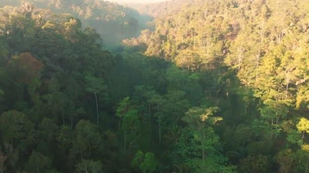 Úžasný pohled z dron s tropický prales v Bali. Letecký pohled