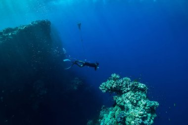 Free diver dive in ocean, underwater view with corals and rocks