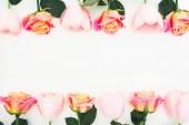 Fotografia Cornice floreale di rose e fiori del tulipano su fondo bianco. Vista piana laica e superiore. Priorità bassa del fiore