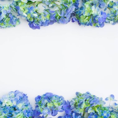 Floral frame with blue hydrangea flowers on white background. Flat lay, top view. Floral background