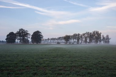 Fog Landscape.Early Morning Mist in the meadow with trees