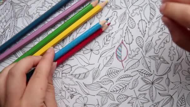 Barevné video ruky držící tužku a zbarvení dospělé omalovánky.