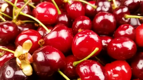 Fresh red cherry fruit.