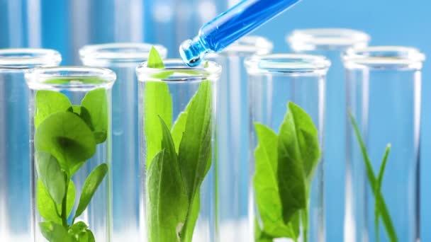 Pipette mit blauem Flüssigkeitstropfen in Reagenzglas mit grüner Pflanze fallen. Nahaufnahme.