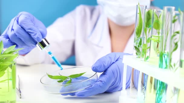 Scientist in laboratory with pipette in hend and plant in test tubes.