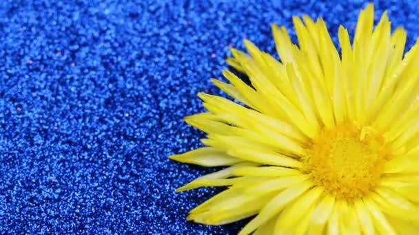 Sárga virág kék csillogó felületen forgatható. Közelről.
