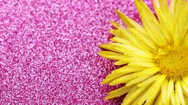 Žlutý květ, otáčení na růžový lesk povrchu. Detailní záběr