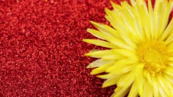 Žlutý květ, otáčení na povrchu červené třpytky. Detailní záběr.