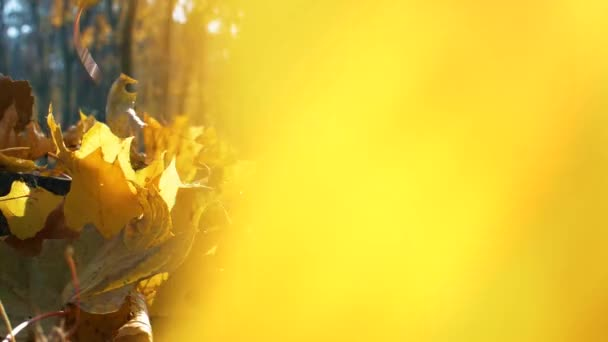 Nice autumn forest with many yellow leaves falling down in slow motion. Close up footage. Nature background.