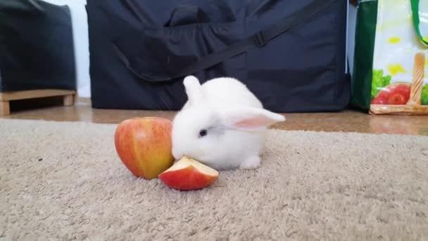 Weißes Kaninchen frisst roten Apfel