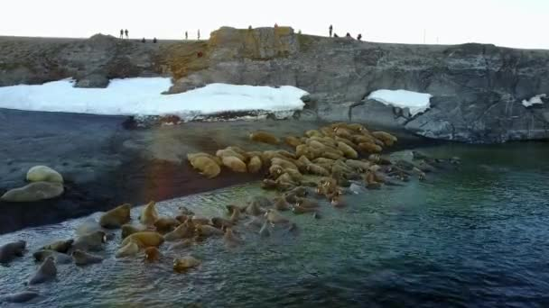 Feeding base of walruses and people on shores of Arctic Ocean aero view.