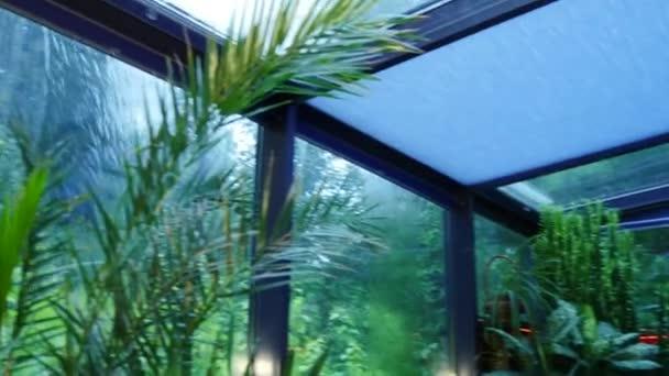 Déšť mimo windows zelené zimní zahrady