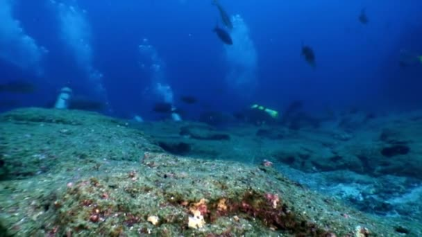 Divers on the background of fish underwater lagoon of ocean on Galapagos.
