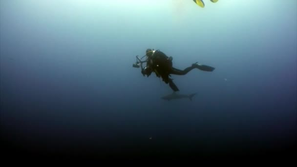 Diver camera operator making a video of the shark in ocean Galapagos.