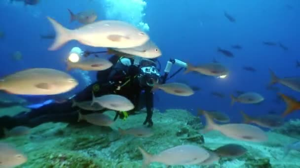 Group of diver and movie camera operator make a video about fish undwewater.