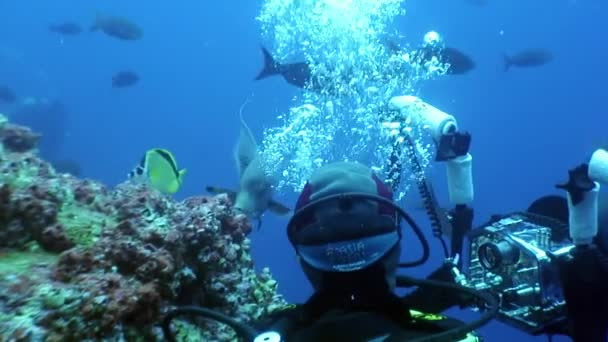 Diver movie camera operator makes a video undwewater.