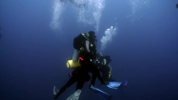 Group of diver undwewater in ocean.