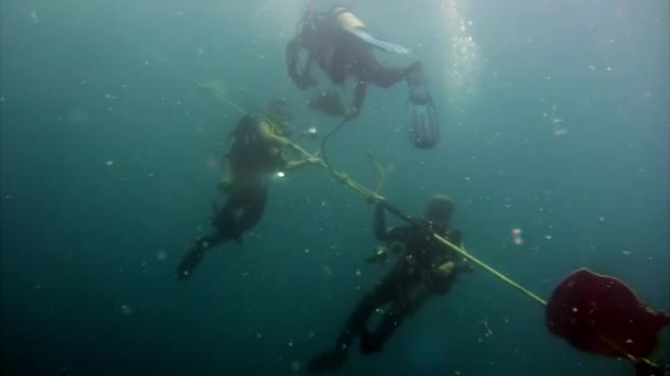Group of diver near rope undwewater in ocean.