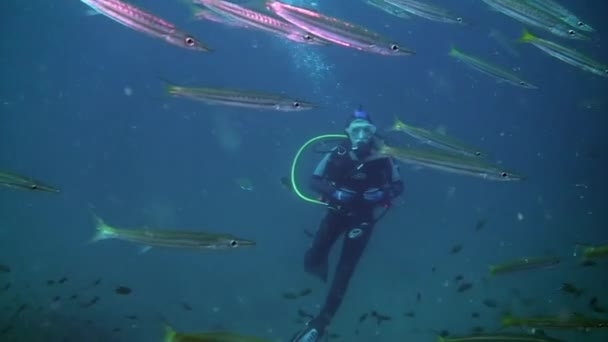Diver floats in background of large amount of fish - Needles undwewater.