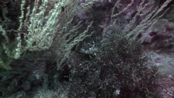 Tropical wildlife of underwater world on background of sea bottom in ocean.