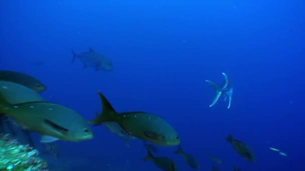Group of diver and school of fish undwewater.