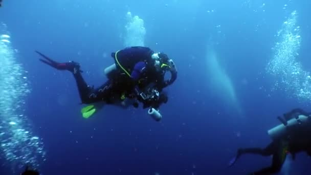 Group of diver swim under water.