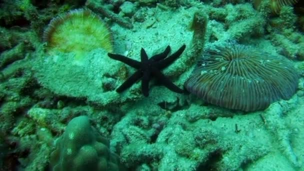 Starfish five-finger underwater lagoon of ocean on Galapagos.