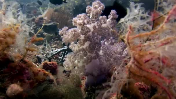 Underwater inhabitants on background of amazing seabed in Maldives.