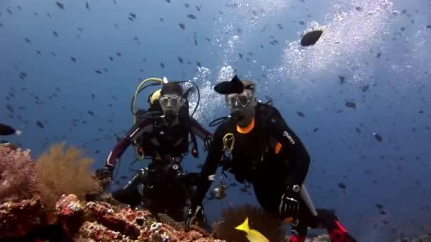 Scuba diver swimming deep underwater.