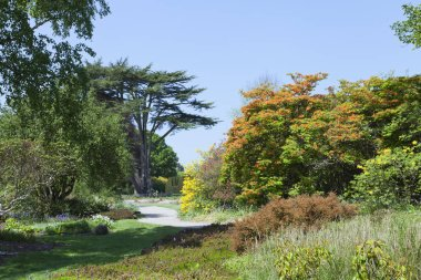 Park with flowering colorful azalea and rhododendron plants, spring flowers, mature trees, on a sunny day .