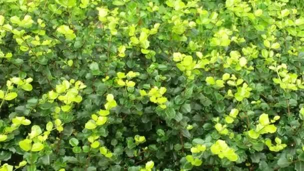 Krása zelených listů